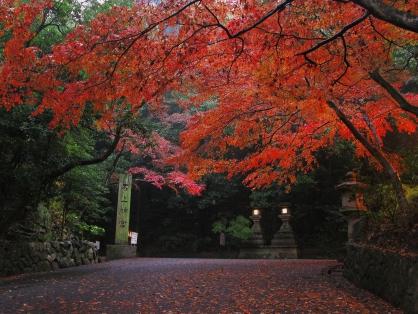 ノルディックウォーキングde色づくキレイ(紅葉 めぐる てんり)【約8km】