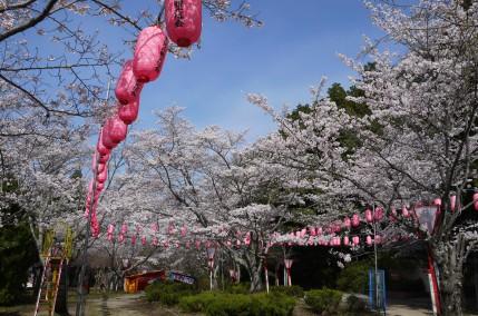 【中止】天理の桜:ライトアップ  ~4月12日