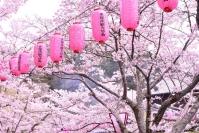 天理の桜ライトアップ