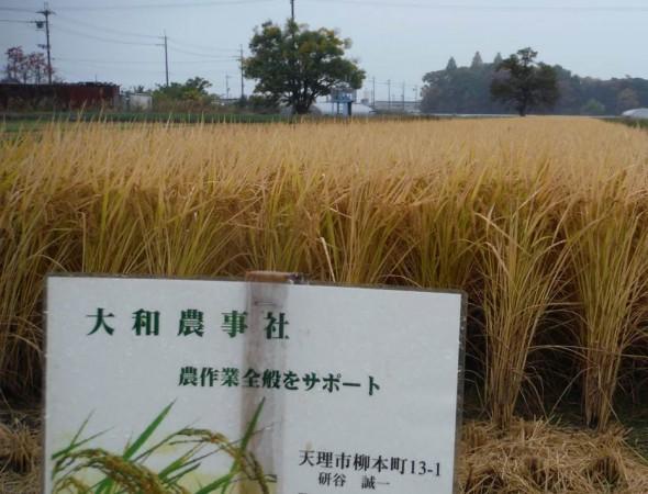 大和農事社