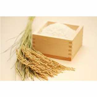 大和めぐみ米 白米10kg